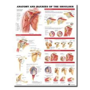 and Injuries of the Shoulder Anatomical Chart: Health & Personal Care