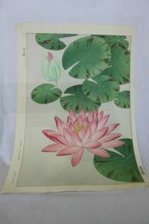 VINTAGE WOOD BLOCK PRINT JAPANESE SIGNED LOTUS FLOWER POND LILY SHODO