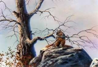 8841 SQUIRREL ON ROCK   DVD (Acrylic) 91 minutes