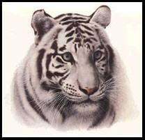 Charles Frace, WHITE TIGER HEAD Print