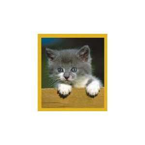 New Magnetic Bookmark Who Are You Gray Kitten High Quality