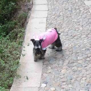Rabbit Style Plush Dog Pet Clothes Apparel Custome Hoodie Coat Jacket