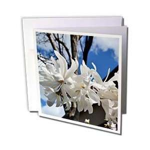 Patricia Sanders Flowers   white flowers   Greeting Cards