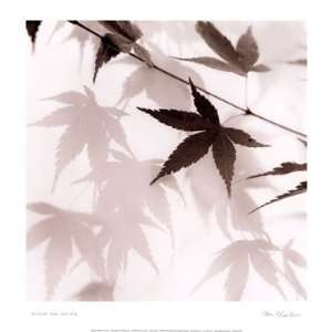Japanese Maple Leaves No. 2 Poster by Alan Blaustein (13