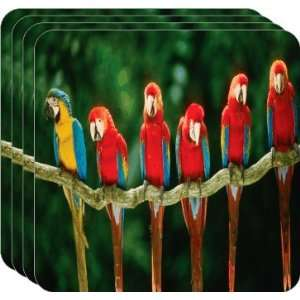 Rikki KnightTM Red and Blue Parrots on Branch   Square