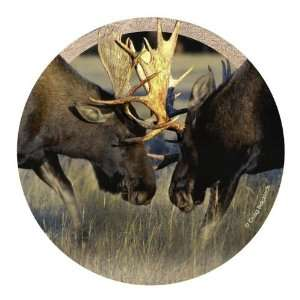 of 4 Natural Sandstone Coasters   Bull Moose Fight: Kitchen & Dining