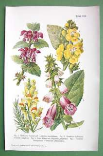 BOTANICAL PRINT COLOR   Dead Nettle Foxglove Toadflax Mullein
