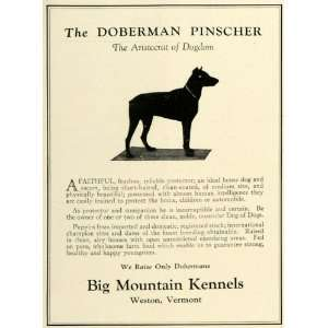 Doberman Pinscher Pet Dog Breeders   Original Print Ad