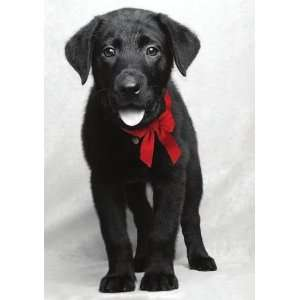National Geographic Lab Puppy Christmas Card Health