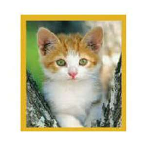 Magnetic Bookmark Looking For Trouble Cat, Beautiful and