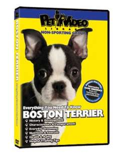 BOSTON TERRIER ~ Puppy ~ Dog Care & Training DVD +BONUS